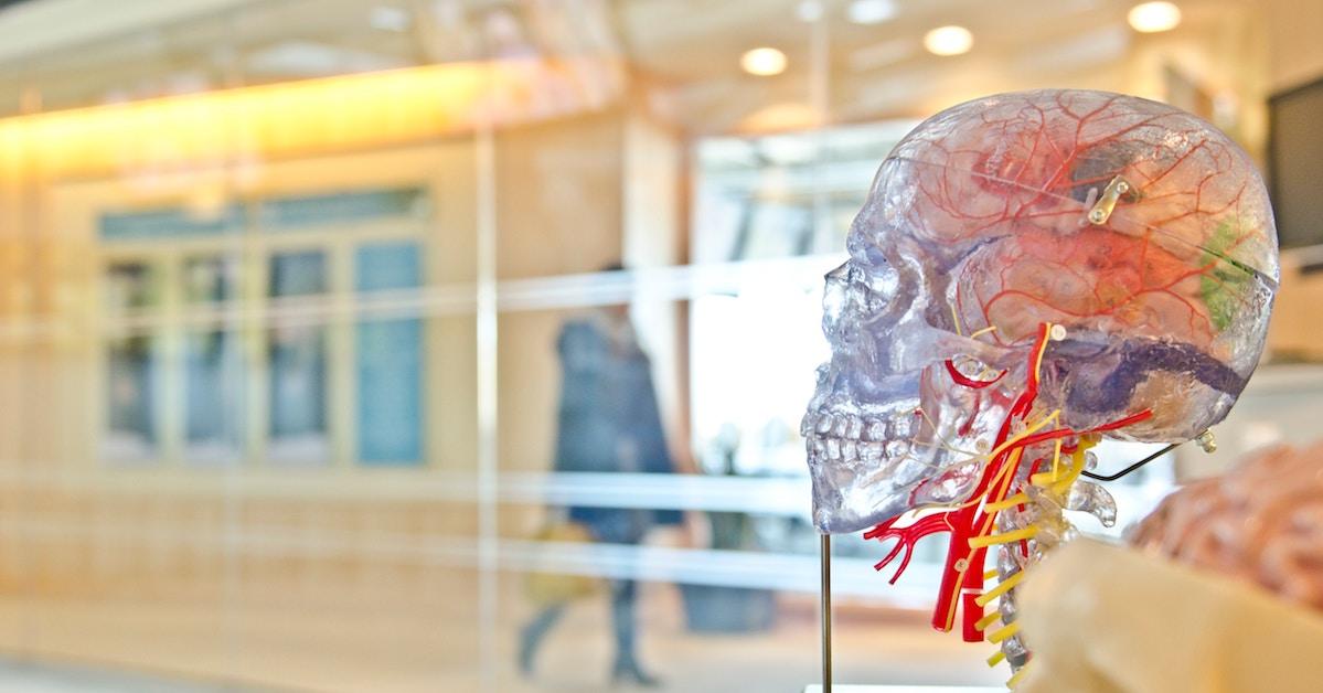 Modelo do cérebro humano em crânio transparente