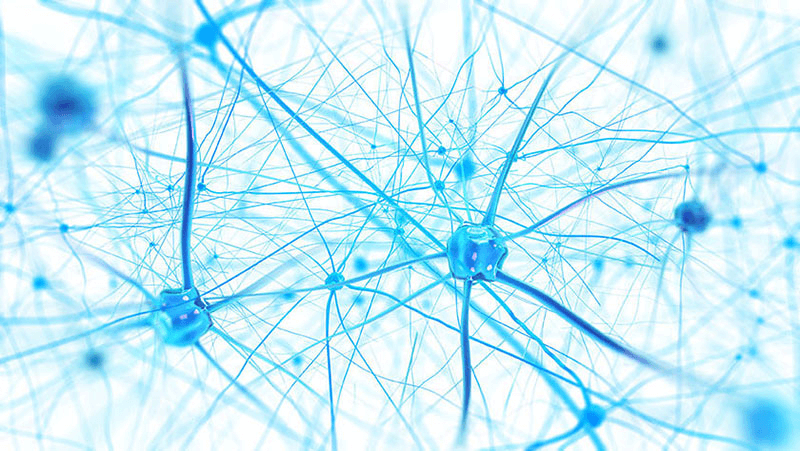 Neural Networks Foundation